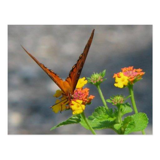 Butterfly Garden Post Card