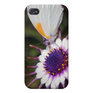 Butterfly gifts iPhone 4/4S case