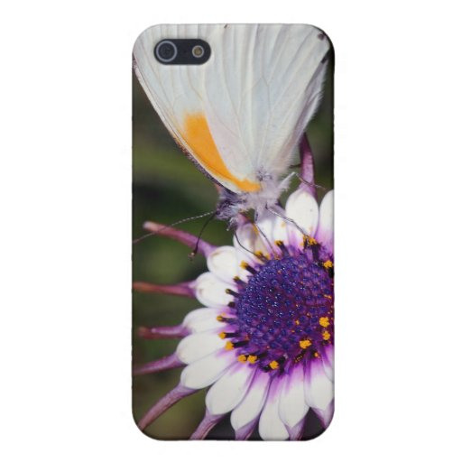 Butterfly gifts cases for iPhone 5