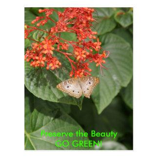 Butterfly - GO GREEN! Postcard