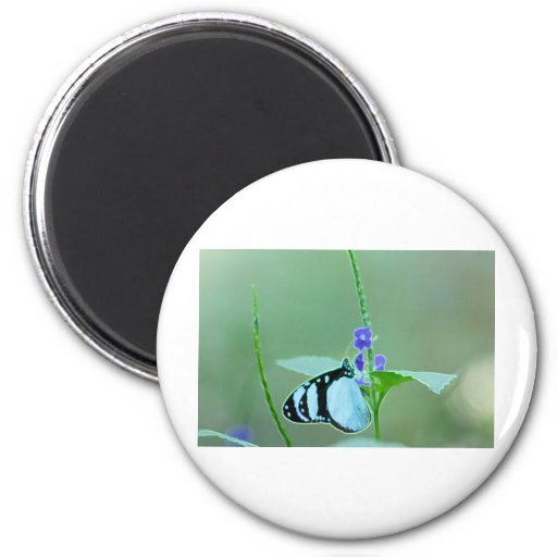 BUTTERFLY GRACE REFRIGERATOR MAGNET