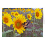 Butterfly, Greeting Card