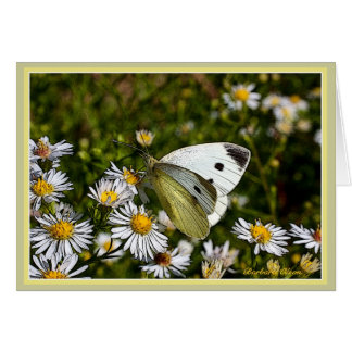 Butterfly Greeting :Card Card