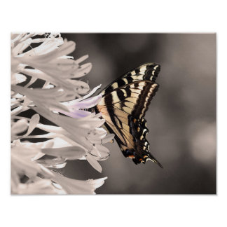 Butterfly Image Poster