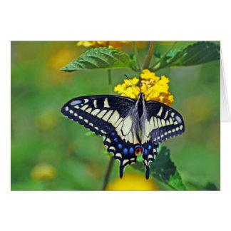Butterfly in Encinitas Greeting Card