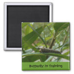 'Butterfly in Training' Square Magnet