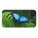 butterfly iPhone 4 case