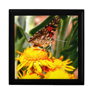 Butterfly Jewelry/Gift Box (large)