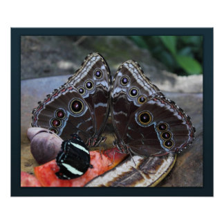 Butterfly Jewels Canvas Print
