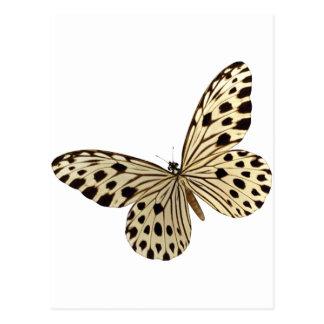 Butterfly Kids Stuff Postcard