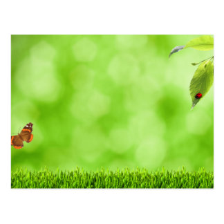 Butterfly & Ladybug over Grass Postcard