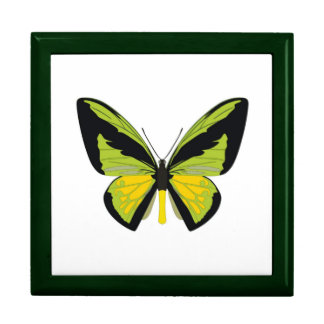 Butterfly Large Square Gift Box