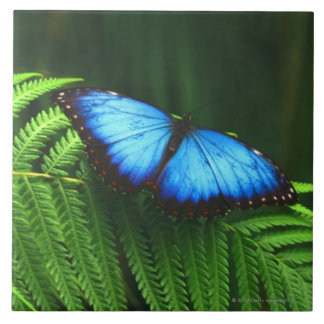 butterfly large square tile