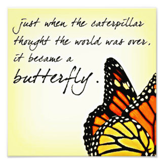 Butterfly Life Struggle Inspirational Quotes Photo Print