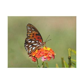 Butterfly Macro Canvas Print - Raja