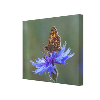 Butterfly Macro Canvas Print -  Zielon