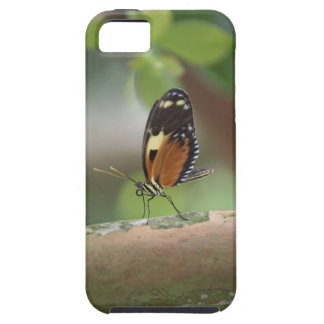 Butterfly Macro Case For The iPhone 5