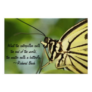 Butterfly Master Poster Posters