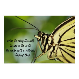 Butterfly Master Poster Print Print