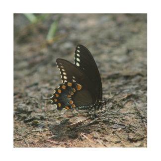 Butterfly, Metal Wall Art Print.
