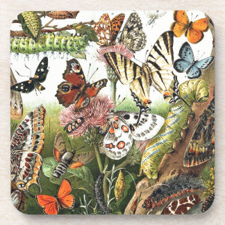 Butterfly Moth Caterpillar Insects Animals Coaster