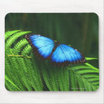 butterfly mouse mats
