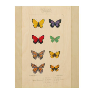 Butterfly Natural History Wood Wall Art