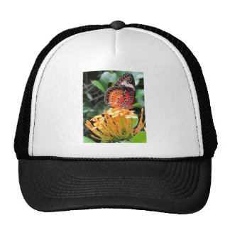 Butterfly on a Blossom Cap