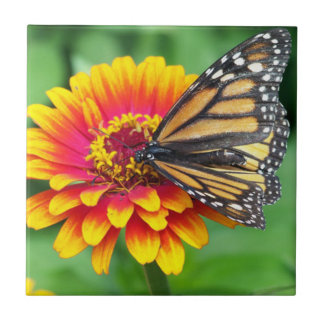 Butterfly on a Flower Ceramic Tile