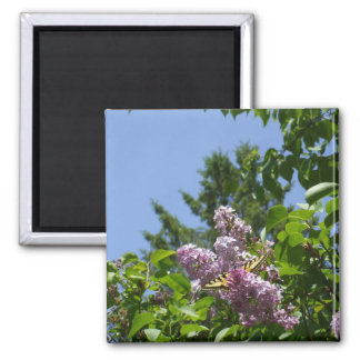 Butterfly on a Pretty Lilac Shrub Square Magnet