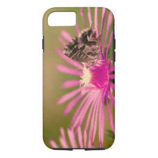 Butterfly on a purple wild flower iPhone 8/7 case
