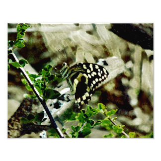 Butterfly on a twig photo print
