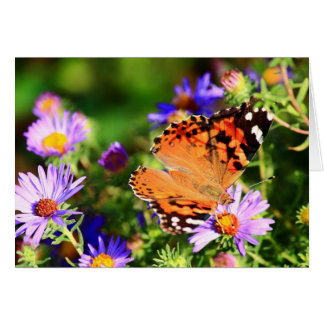 Butterfly on Aster flowers note card/greeting card