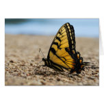 Butterfly on Beach Greeting Cards