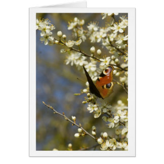 Butterfly on blossom card