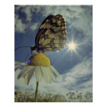 Butterfly on camomile flower with sun,