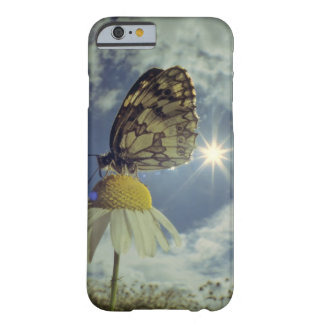 Butterfly on camomile flower with sun, barely there iPhone 6 case