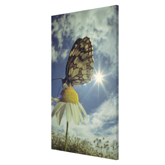 Butterfly on camomile flower with sun, canvas print