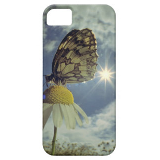 Butterfly on camomile flower with sun, case for the iPhone 5
