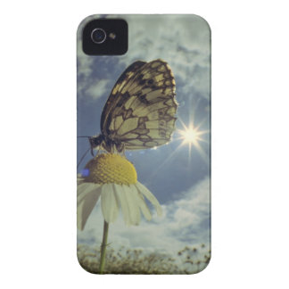 Butterfly on camomile flower with sun, iPhone 4 covers