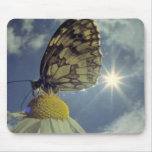 Butterfly on camomile flower with sun, mouse pad