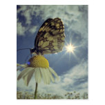 Butterfly on camomile flower with sun, postcard