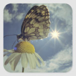 Butterfly on camomile flower with sun, square sticker