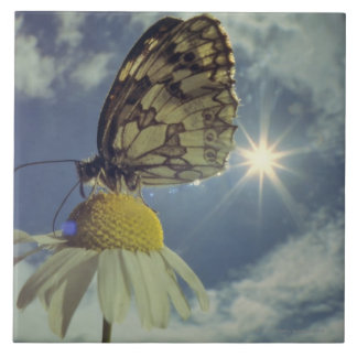 Butterfly on camomile flower with sun, tile