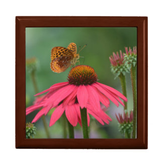 Butterfly On Cone Flower Large Square Gift Box
