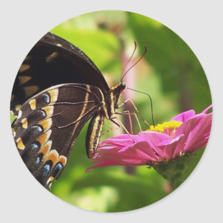 Butterfly on daisy classic round sticker