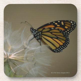 Butterfly on dandelion beverage coasters
