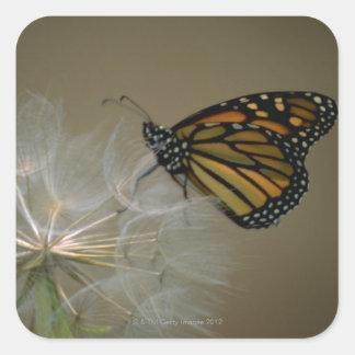 Butterfly on dandelion square sticker