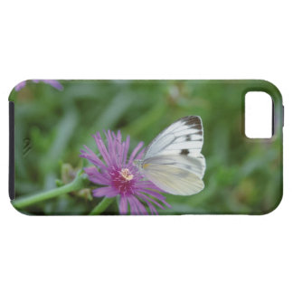 Butterfly on flower case for the iPhone 5