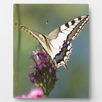 butterfly on flower plaque
